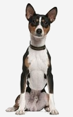 What Does Primitive Dog Breed Mean